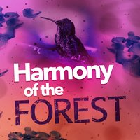 Harmony of the Forest — Mediation Sounds of Nature