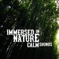 Immersed in Nature: Calm Sounds — Deep Sleep Nature Sounds