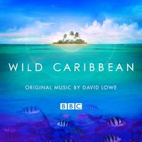 Wild Caribbean - Original Music By David Lowe — David Lowe