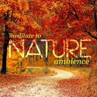 Meditate to Nature Ambience — Meditate to Sounds of Nature