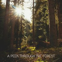 A Peek Through the Forest — Meditation Music Zone