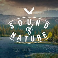 Sound of Nature — Natural Sounds, Nature Sound Collection, Nature Ambience, Natural Sounds|Nature Ambience|Nature Sound Collection