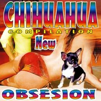 Chihuahua compilation new — сборник