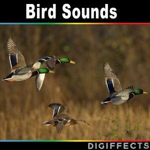 Digiffects Sound Effects Library - Close Single Call from Grey Heron