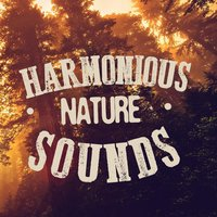 Harmonious Nature Sounds — Soothing Sounds