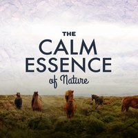 The Calm Essence of Nature — Bruits naturels