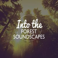 Into the Forest - Soundscapes — Forest Soundscapes