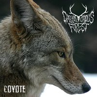 Coyote — Carnivorous Forest