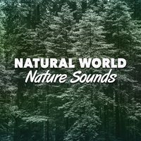 Natural World: Nature Sounds — Mediation Sounds of Nature