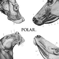 This Polar Noise - EP — Polar.