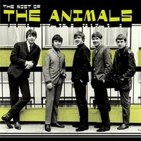 Most Of The Animals — The Animals