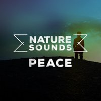 Nature Sounds: Peace — Nature Sounds for Concentration