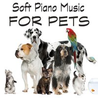 Soft Piano Music for Pets — The O'Neill Brothers Group
