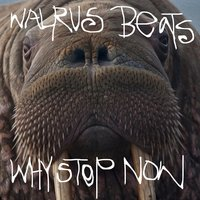 Why Stop Now — Walrus Beats