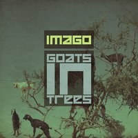 Goats In Trees — Imago
