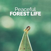 Peaceful Forest Life — Nature Ambience
