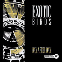 Day After Day — Exotic Birds