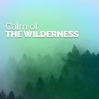 Calm of the Wilderness — Forest Sounds Relaxing Spa Music Singing Birds
