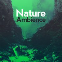 Nature Ambience — Nature Ambience