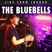 Live From London — The Bluebells