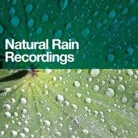 Natural Rain Recordings — Rainfall, Rain Sounds, Outside Broadcast Recordings, Outside Broadcast Recordings|Rain Sounds|Rainfall