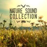 Nature Sound Collection — Natural Sounds, Nature Sound Collection, Natural Sounds|Nature Sound Collection|Nature Sounds