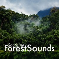 Soothing Forest Sounds — Soothing Sounds
