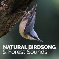 Natural Birdsong & Forest Sounds — Nature Sound Collection
