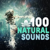 100 Natural Sounds — Natural Sounds