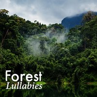 Forest Lullabies — Deep Sleep Nature Sounds