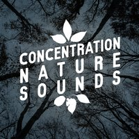 Concentration Nature Sounds — Nature Sounds Meditation, Deep Sleep Relaxation, Nature Sounds for Concentration, Deep Sleep Relaxation|Nature Sounds for Concentration|Nature Sounds Meditation