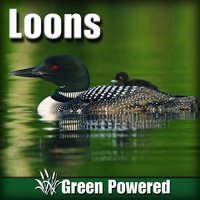Loons (Nature Sound) — Green Powered