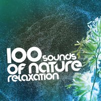 100 Sounds of Nature Relaxation — Sounds Of Nature Relaxation