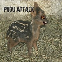 Attack Of Pudu — Pudu Attack & The Bystander Mr. G.