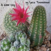 A New Day — Lucia Timmerman