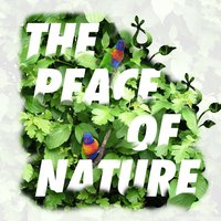 The Peace of Nature — Massage Tribe, Massage Music, Rest & Relax Nature Sounds Artists, Massage Music|Massage Tribe|Rest & Relax Nature Sounds Artists