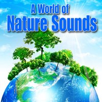 A World of Nature Sounds — Best Nature Sounds