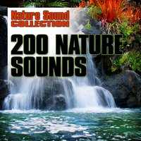 200 Nature Sounds — Nature Sound Collection