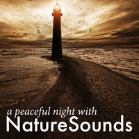 A Peaceful Night with Nature Sounds — Sleep Sounds Of Nature