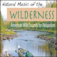 Natural Music of the Wilderness: American Wild Sounds for Relaxation — Steven Current
