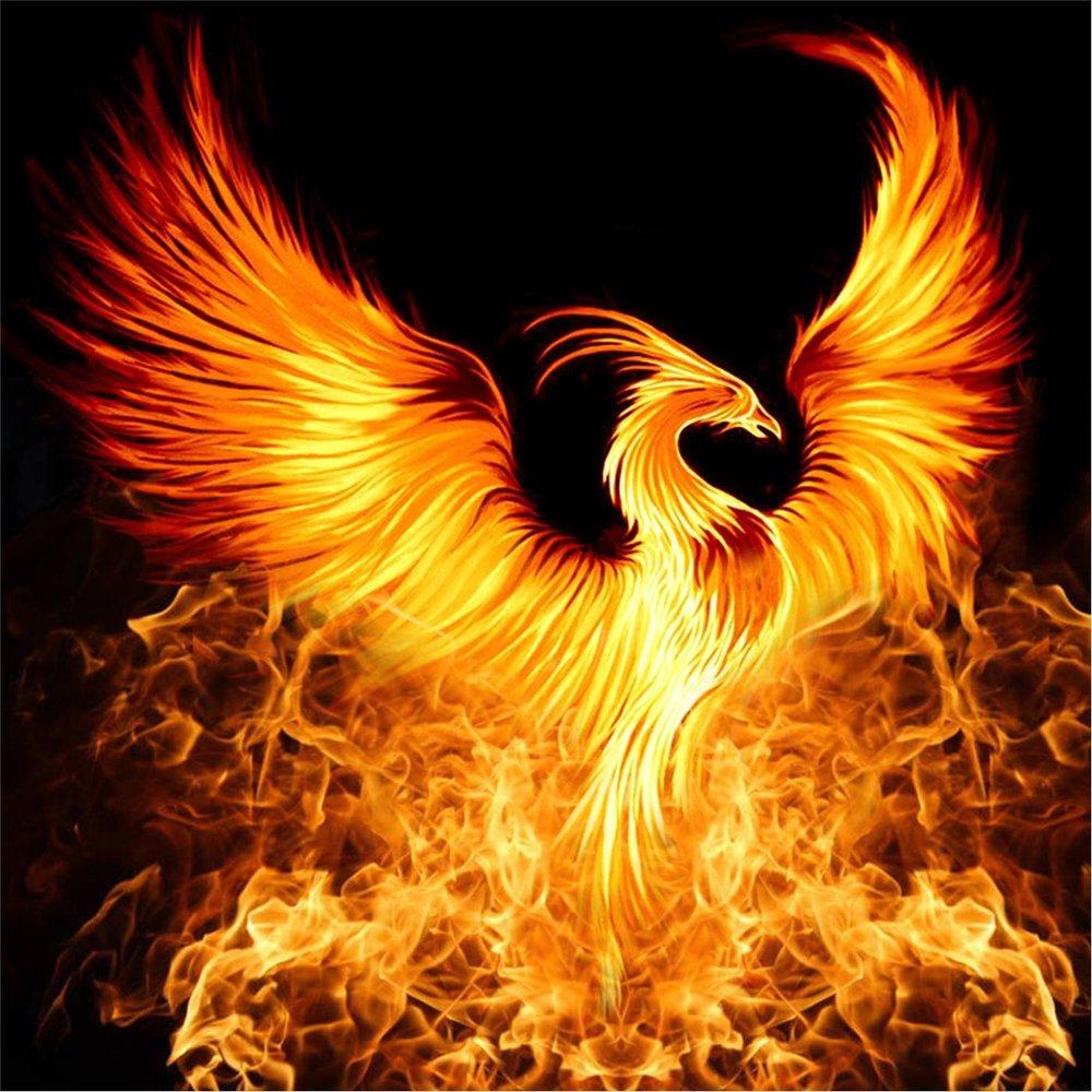 птица феникс восставшая из пепла картинки красивые как раз никого