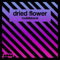 Multilateral — Dried Flower