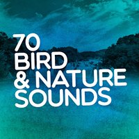 70 Bird & Nature Sounds: Spa Music, Natural Peace, Calming Sounds, Personal Peace, Introspection — сборник