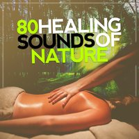 80 Healing Sounds of Nature: Tranquil Nature, Soothing Ambience, Calm Relaxation, Therapeutic Zen — сборник