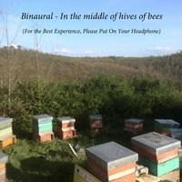 Binaural: In the Middle of Hives of Bees — Marco Cardone