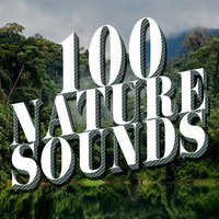 100 Nature Sounds — Nature Sounds Nature Music, Nature Sound Collection, Nature Sound Collection|Nature Sounds|Nature Sounds Nature Music