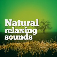 Natural Relaxing Sounds — The Healing Sounds of Nature, Relaxing Nature Sounds, Best Nature Sounds for Relaxing, Best Nature Sounds for Relaxing|Relaxing Nature Sounds|The Healing Sounds of Nature