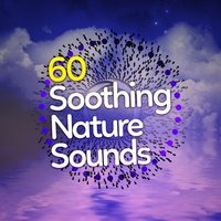60 Soothing Nature Sounds: Sleep Music, Calm Relaxation, Zen Mindfulness, Birdsong, New Age Peace — сборник