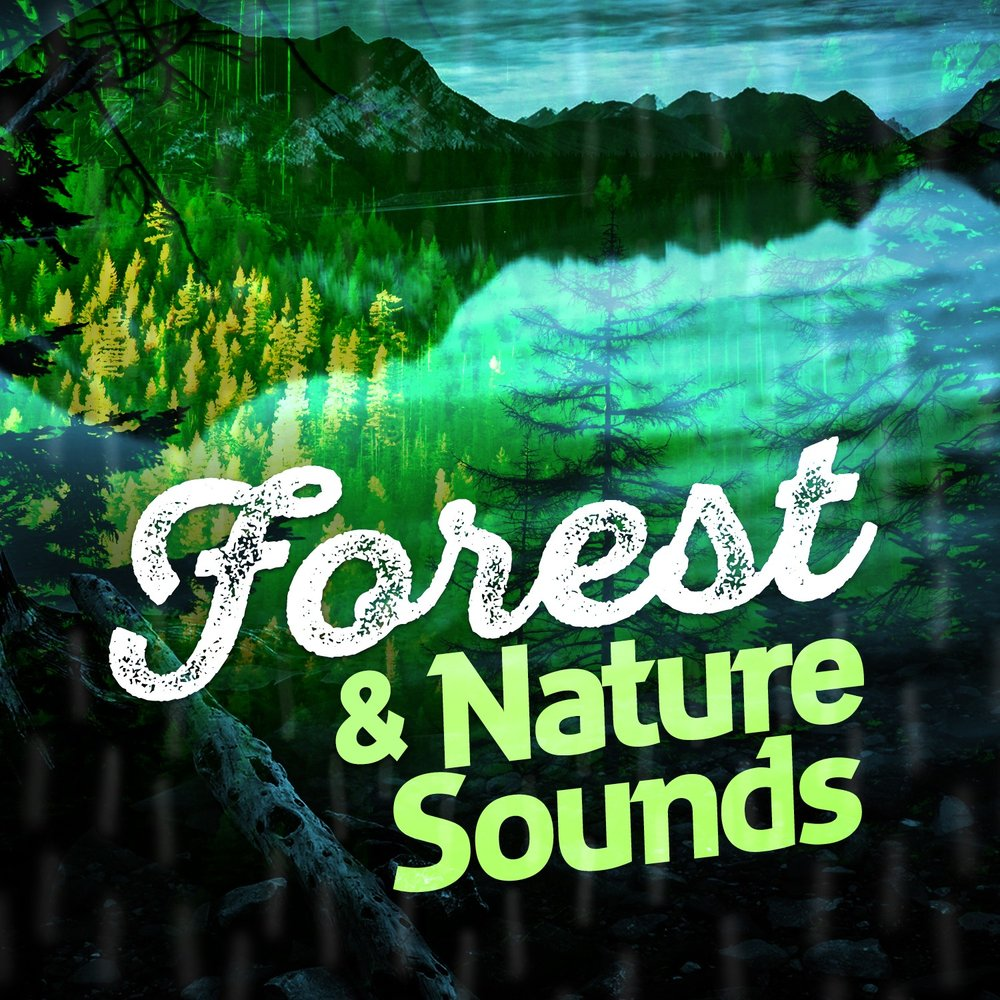 Forest & Nature Sounds — Ambient Nature Sounds  Слушать онлайн на