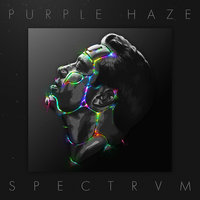 Spectrvm — Purple Haze